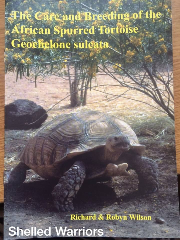 the care and breeding of the african spurred tortoise